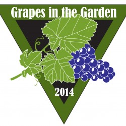 Grapes in the Garden 2014